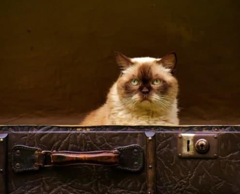 hoe pak je je koffer in